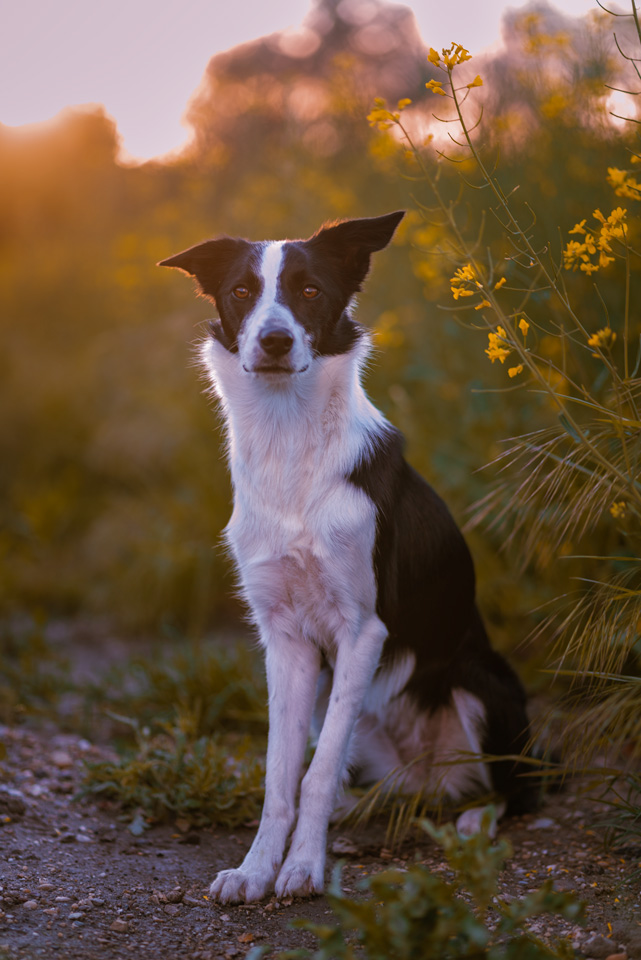 szabadtéri_kutyafotózás-12