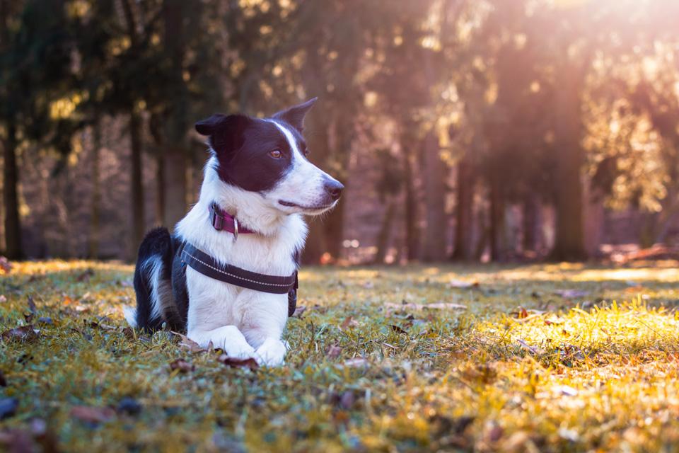 szabadtéri_kutyafotózás-21